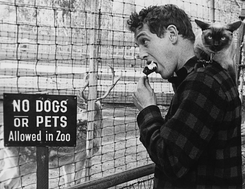 Paul Newman with his cat, Louis XIV, at the zoo, 1956. Photo by Sanford Roth.jpg