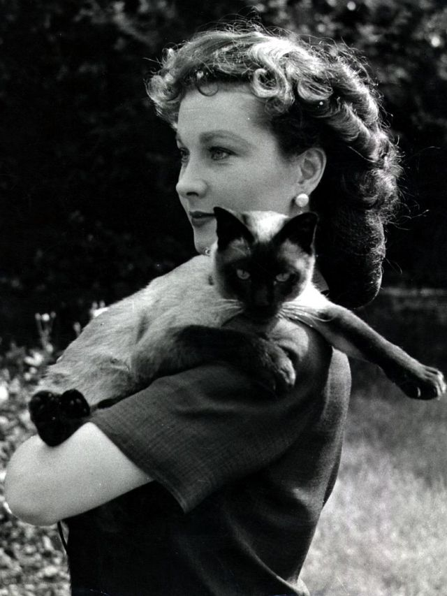 Vivien Leigh with 'New Boy,' her Siamese cat, 1940..jpg