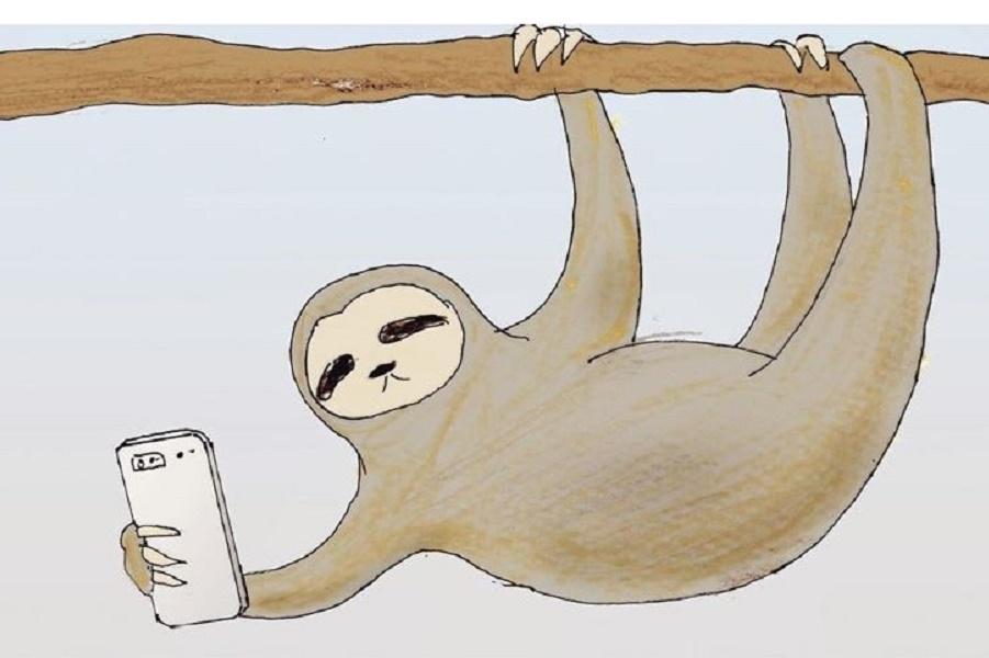 Смешные иллюстрации о жизни ленивцев