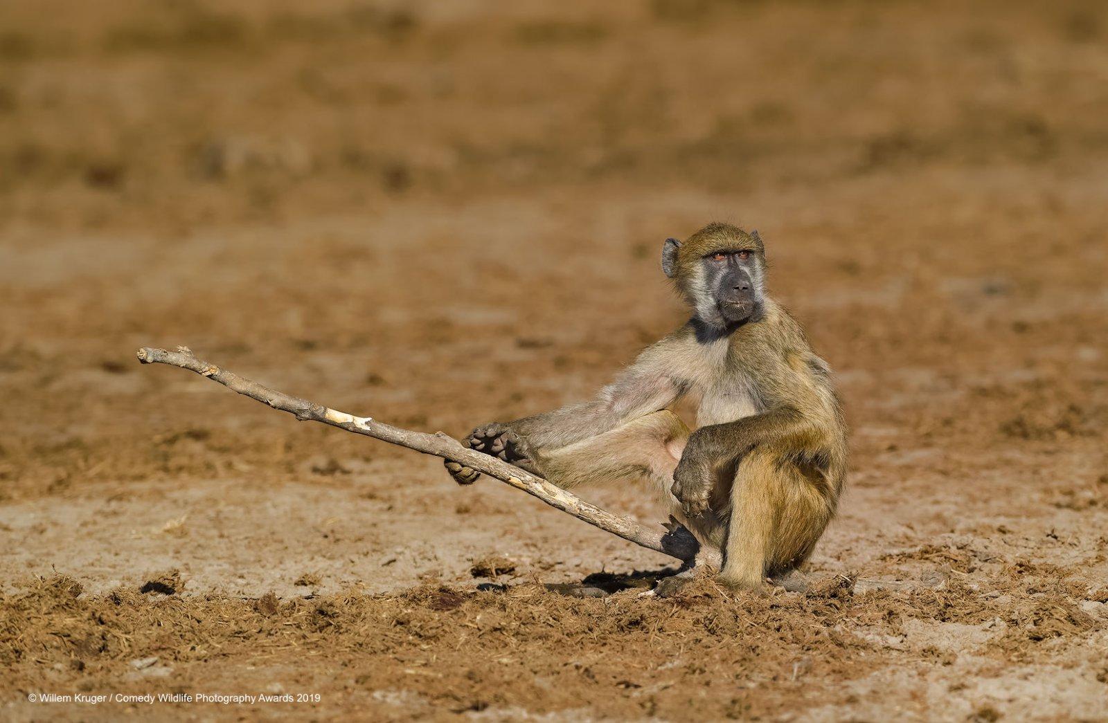40 самых смешных финалистов премии Comedy Wildlife Photography Awards 2019 фотографии, дикой, природы, конкурса, который, Comedy, конкурс, куданибудь, Awards, Wildlife, природе, Прошло, похоже, Самый, достигнуты, Вовторых, более, касается, сохранения, «Никто