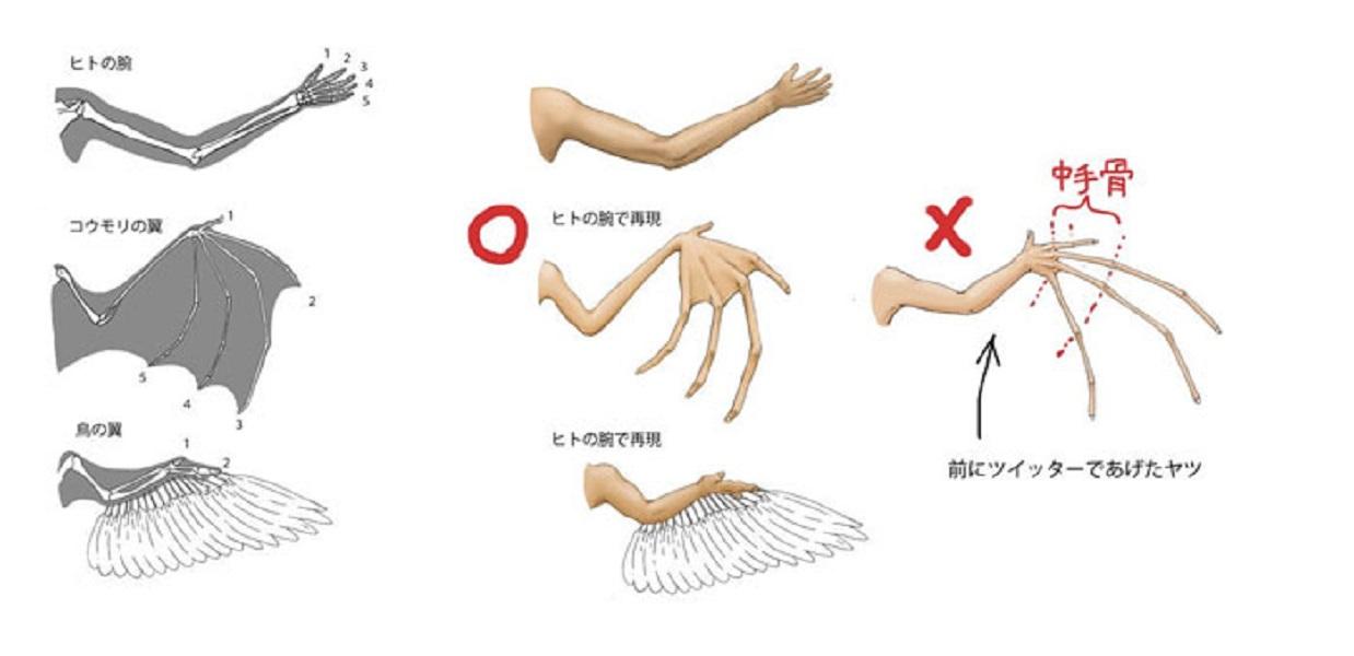 humans-animals-anatomy-satoshi-kawasaki-5d7f2e744fe20__700.jpg