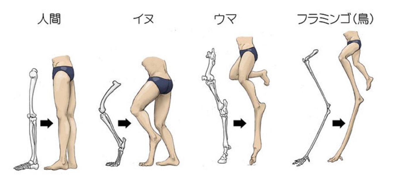 humans-animals-anatomy-satoshi-kawasaki-5d7f3f555d01a__700.jpg