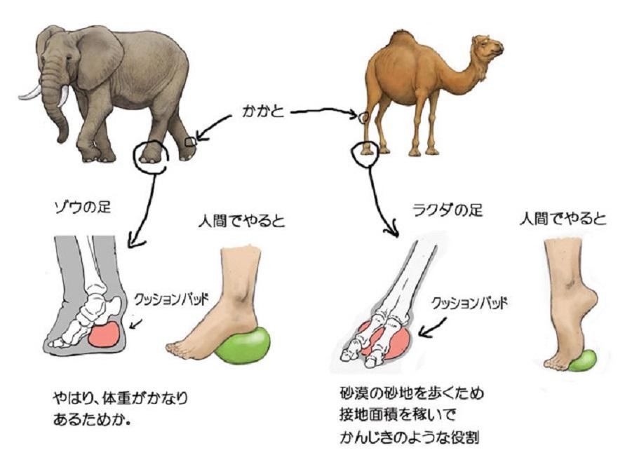 humans-animals-anatomy-satoshi-kawasaki-5d7f3fc9d8470__700.jpg
