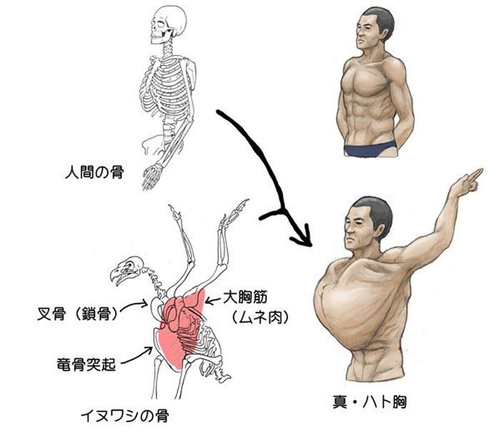 humans-animals-anatomy-satoshi-kawasaki-5d7f33fbc1793__700.jpg
