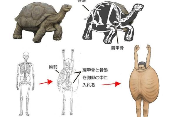 Будут ли люди похожи на животных, если дать им звериный скелет?
