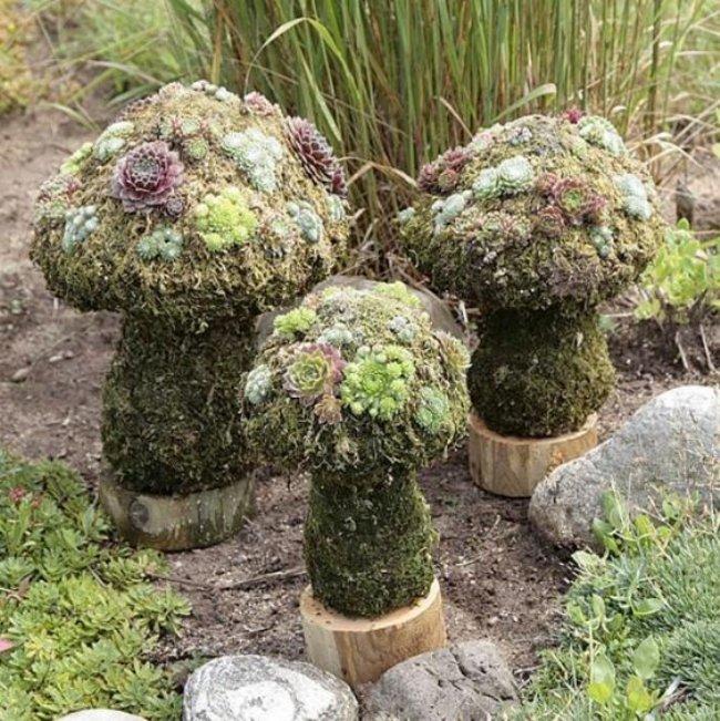succulent mushrooms