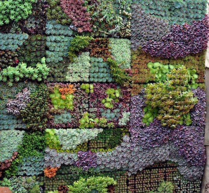 succulent_mural