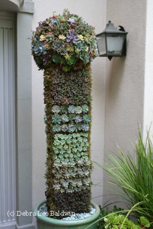 Topiary-closeup