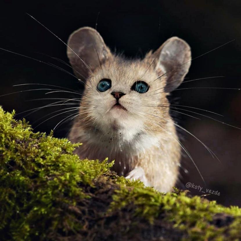 cat_1.jpg