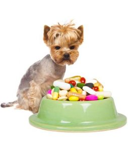 How-to-give-a-dog-a-pill-254x300.jpg