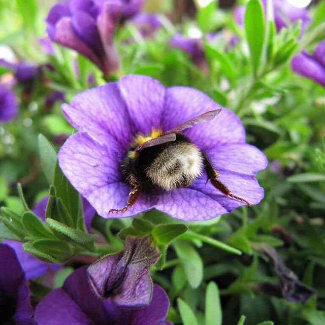 tired-bumblebees6.jpg