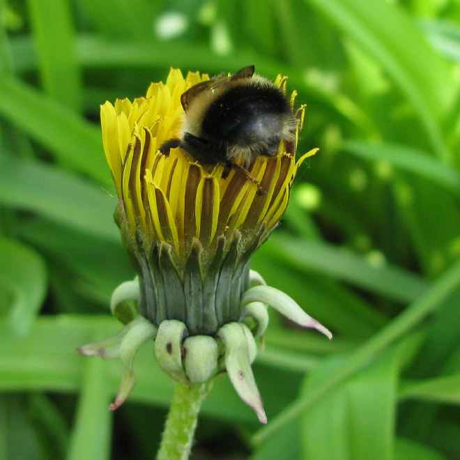 tired-bumblebees7.jpg