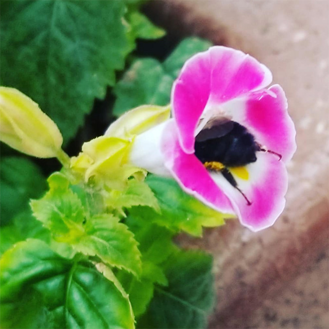 tired-bumblebees11.jpg
