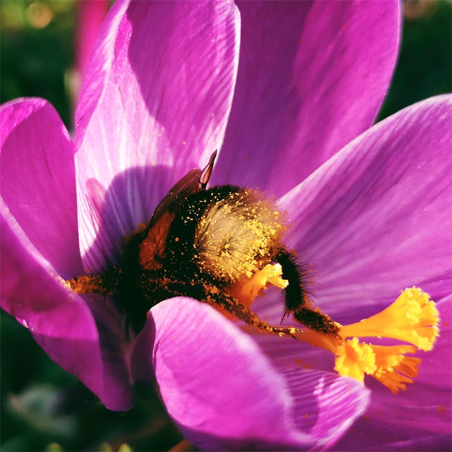 tired-bumblebees15.jpg