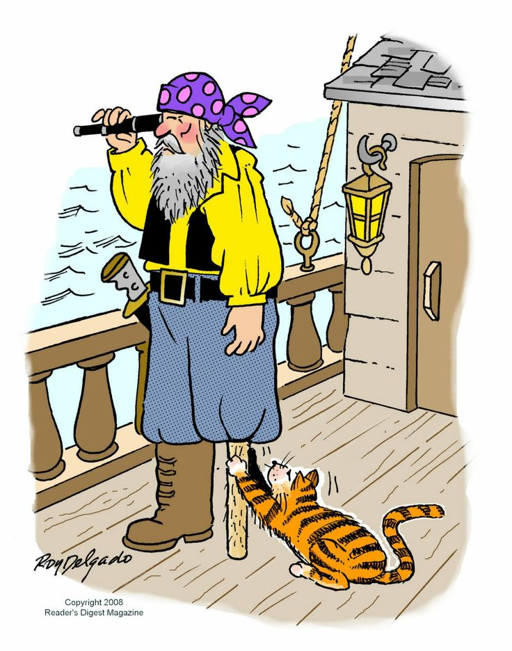 16bf49f58a8d3d69ba9c769c8dd69a04--funny-cat-jokes-funny-cats.jpg