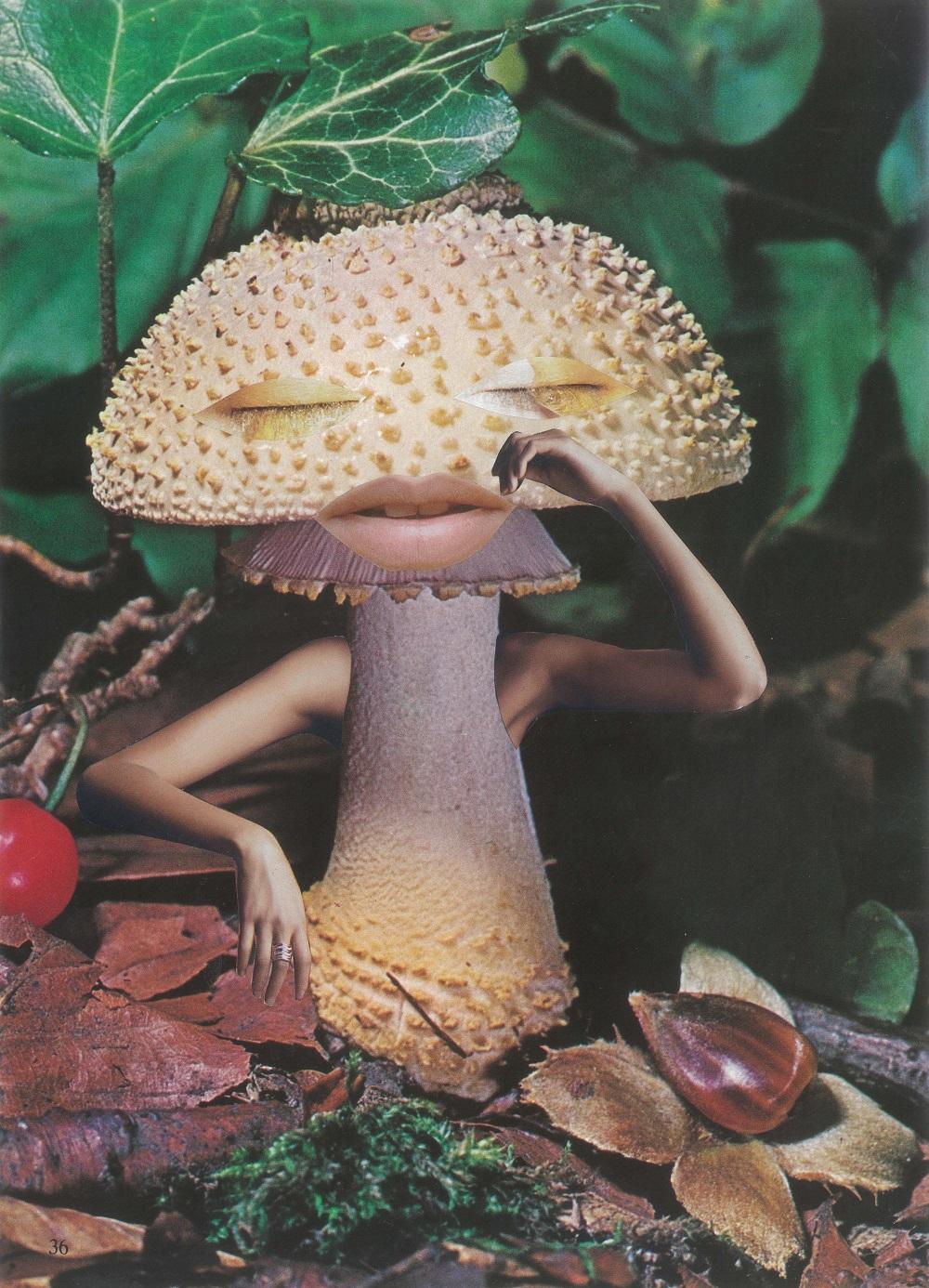 mindful mushroom - Seana Gavin_0.jpg