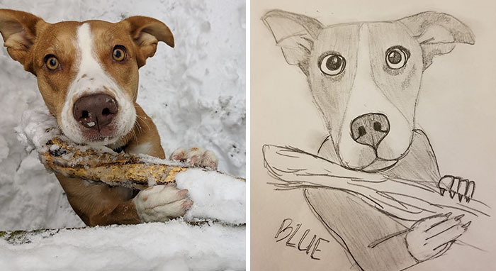 bad-pet-drawings-wisconsin-humane-society-donation-24-5e57832080ab6__700.jpg
