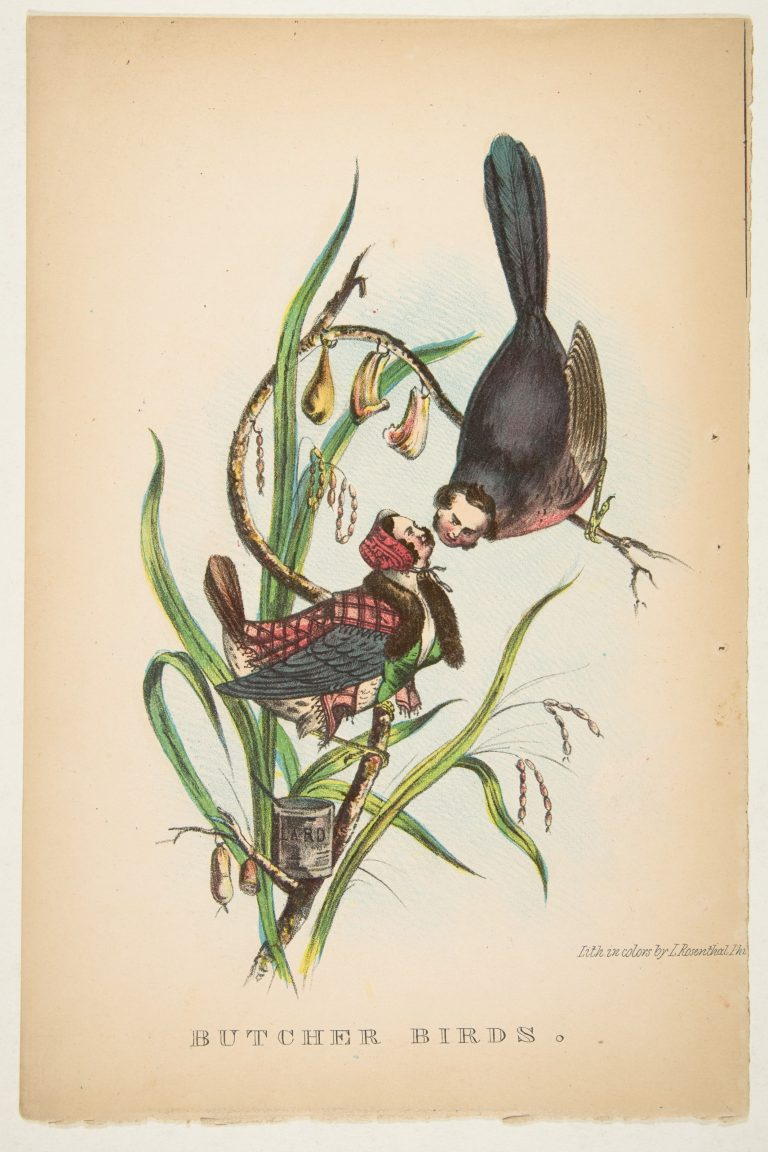 natural-history-of-the-human-race-butcher-bird-768x1152.jpg
