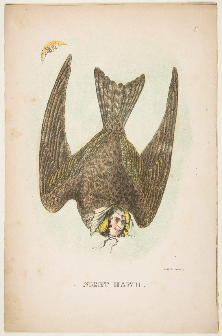 natural-history-of-the-human-race-night-hawk--768x1161.jpg