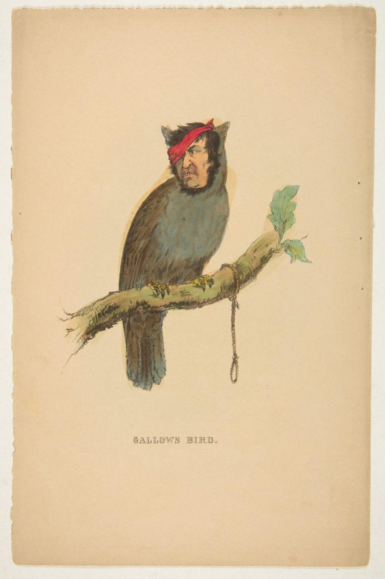 natural-history-of-the-human-race-sallow-bird-768x1154.jpg