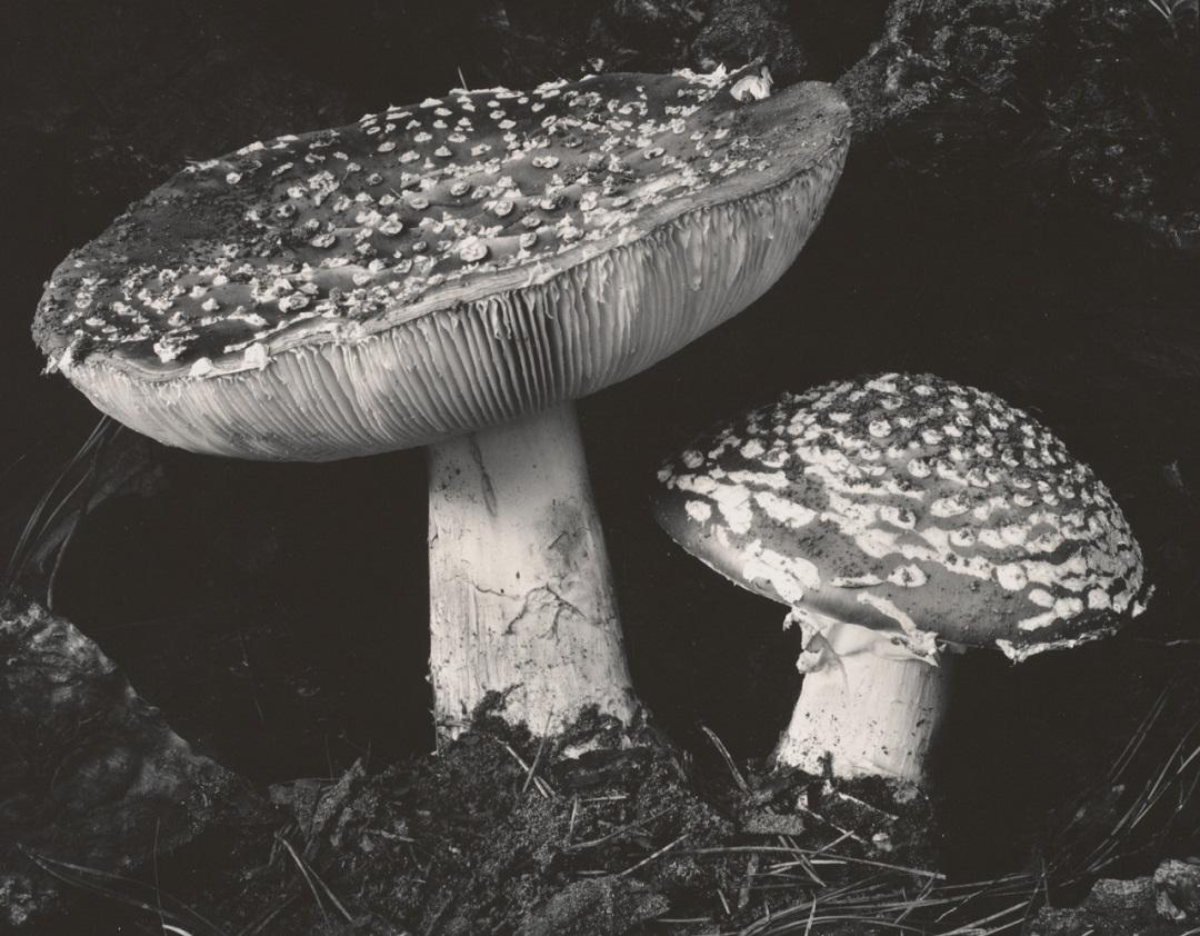 Фото Эдварда Генри Уэстона (13).jpg