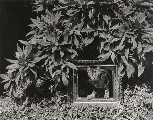 Фото Эдварда Генри Уэстона (16).jpg