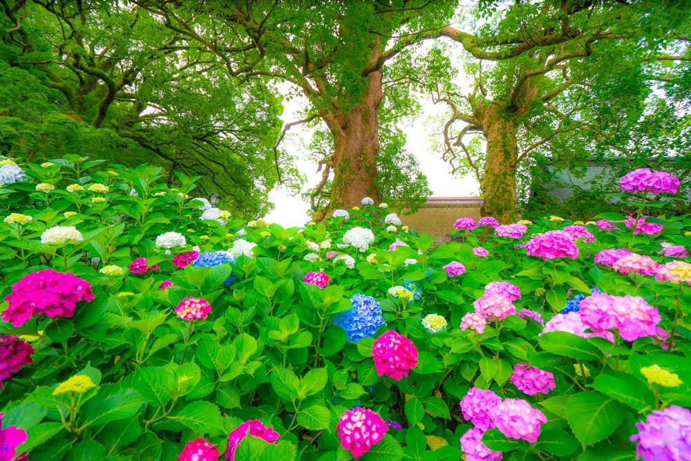 Фотограф из Фукуоки Масаси (7).jpg