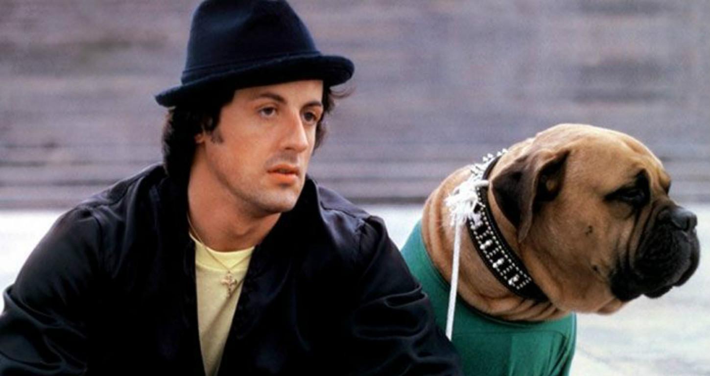 история Сталлоне и его пса Буткуса  (3).jpg