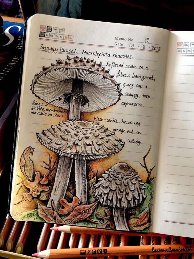 nature-journal-illustrations-jo-brown-vinegret-9.jpg