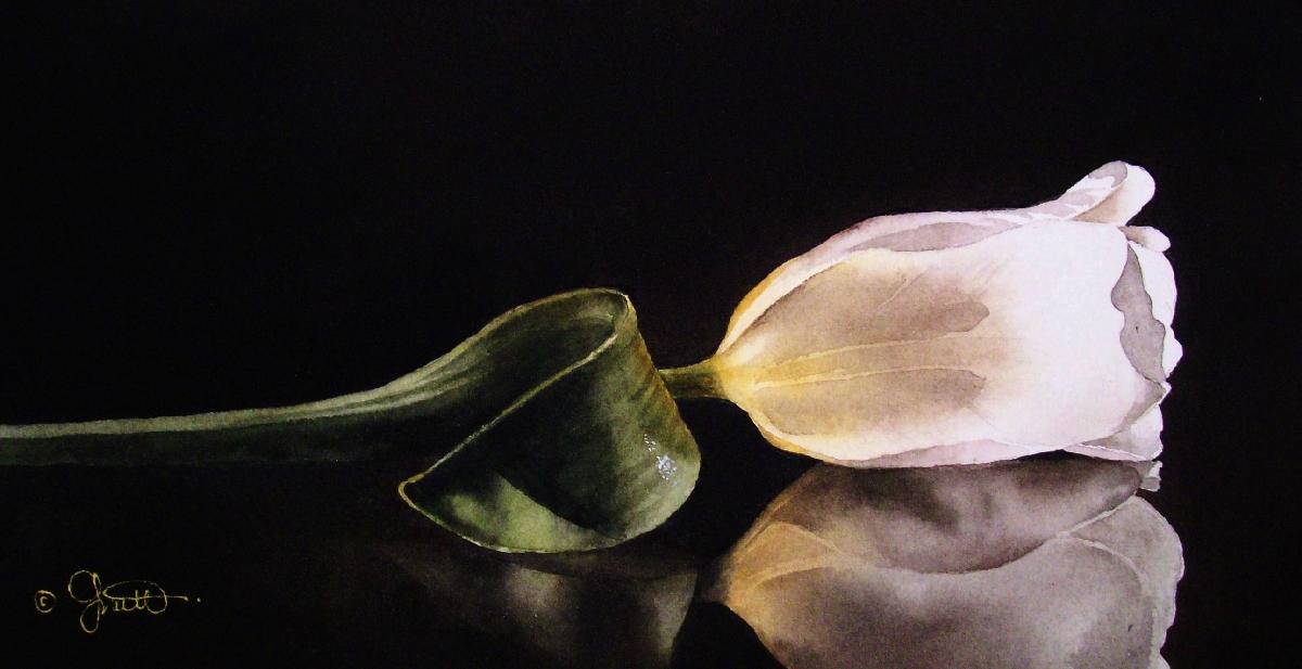 White Tulip on Glass