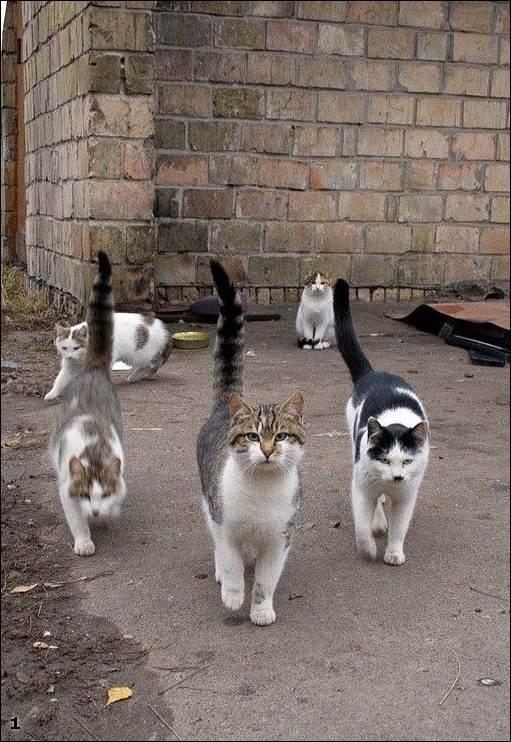Кошка бывает кусачей только от жизни собачей?!....