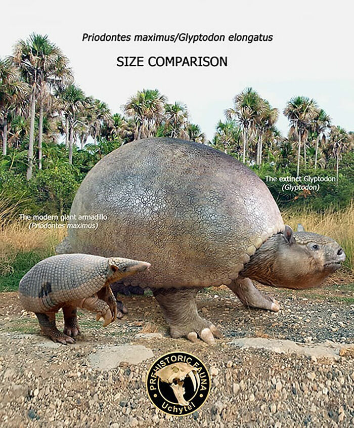 39-visual-comparisons-of-the-size-of-long-extinct-animals-with-their-modern-relatives-60fa72a3a1c05__700.jpg