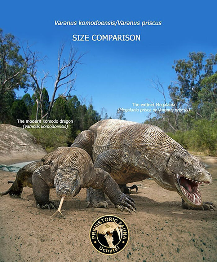 39-visual-comparisons-of-the-size-of-long-extinct-animals-with-their-modern-relatives-60fa72a11cd8c__700.jpg