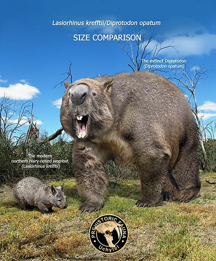 39-visual-comparisons-of-the-size-of-long-extinct-animals-with-their-modern-relatives-60fa729d99eb1__700.jpg