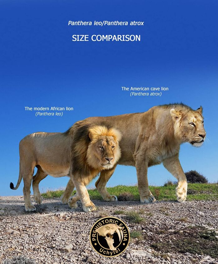 39-visual-comparisons-of-the-size-of-long-extinct-animals-with-their-modern-relatives-60fa7284dc9ab__700.jpg