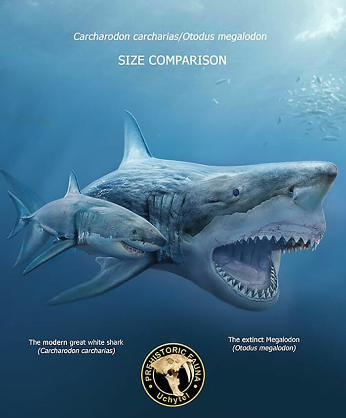 39-visual-comparisons-of-the-size-of-long-extinct-animals-with-their-modern-relatives-60fa72833c73f__700.jpg
