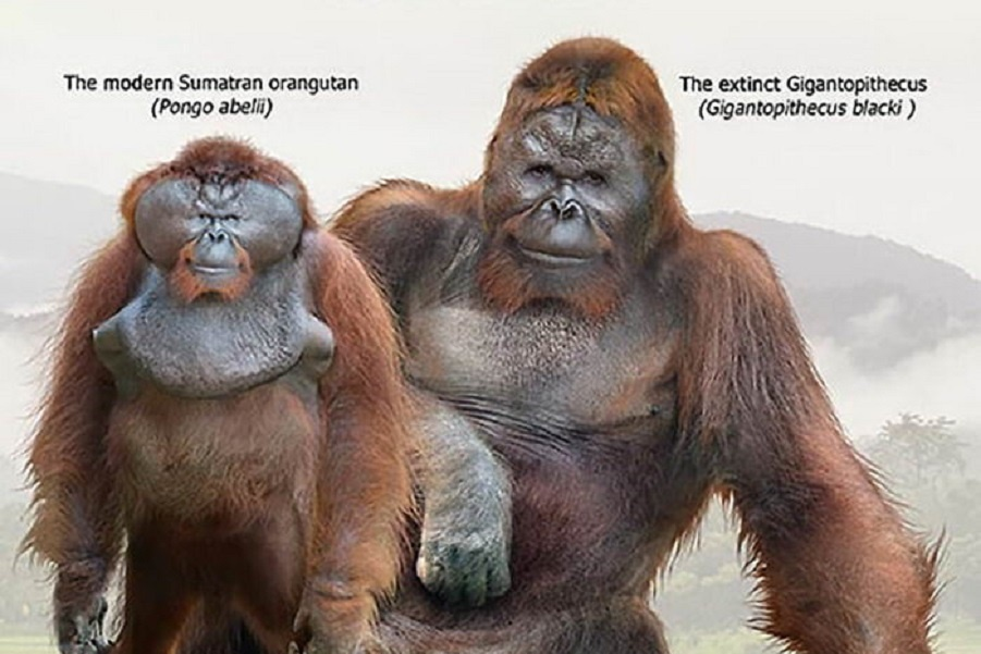 size-extinct-animals-02.jpg