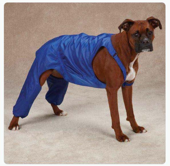 tough-questions-funny-if-dog-wear-pants-17.jpg