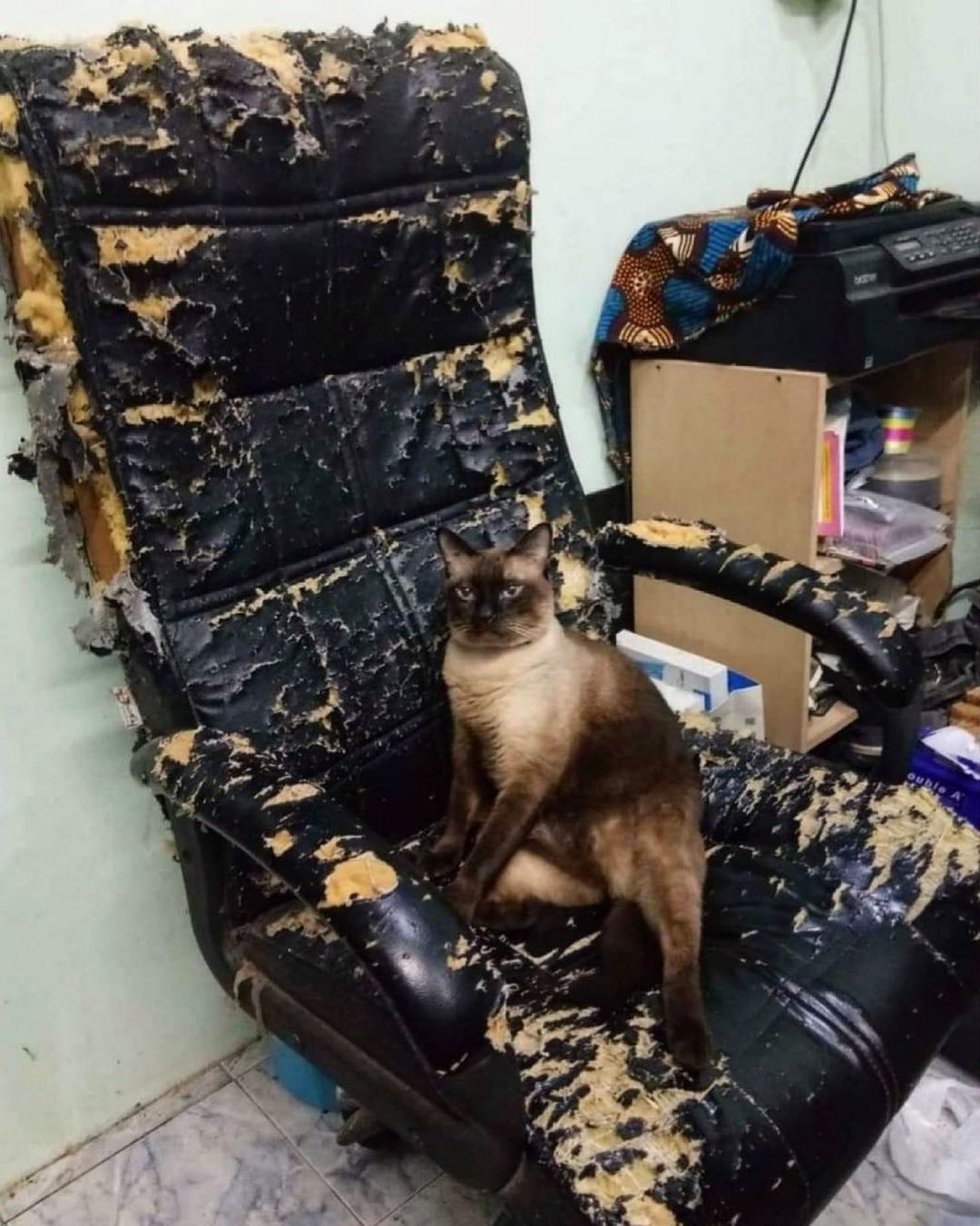 Смешные фотографии животных (2).jpg