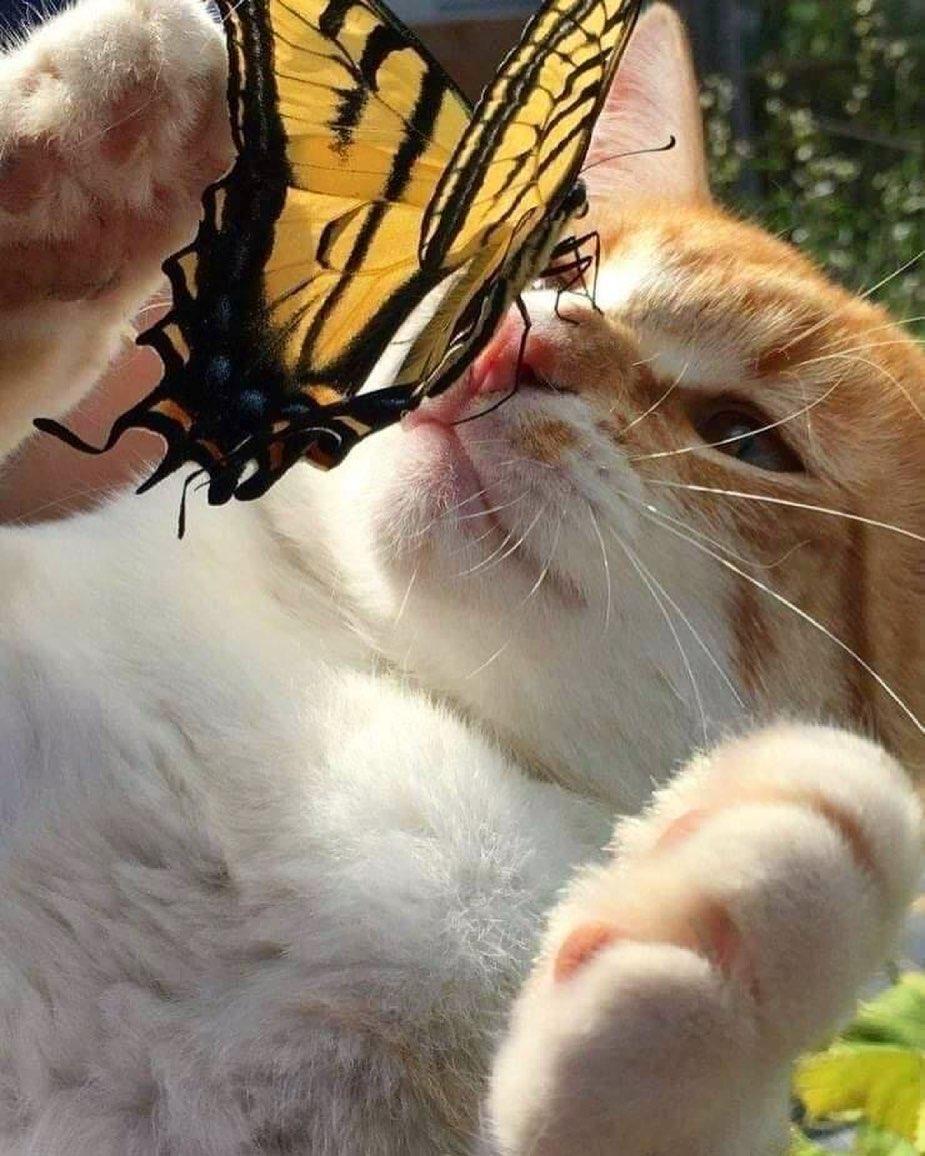 Смешные фотографии животных (3).jpg