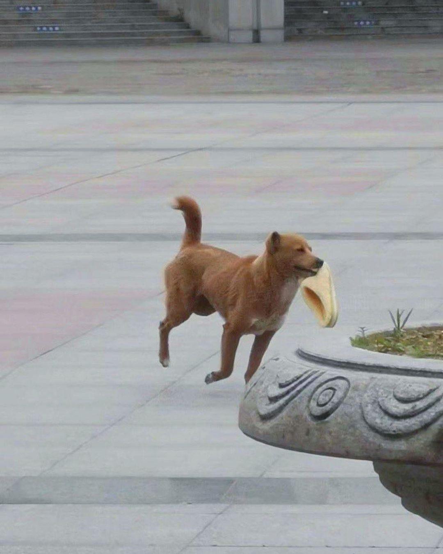 Смешные фотографии животных (9).jpg