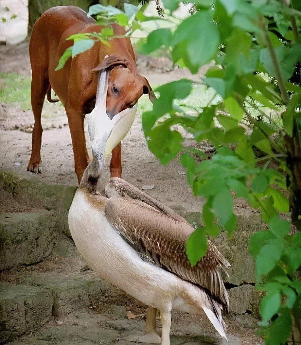 Смешные фотографии животных (11).jpg