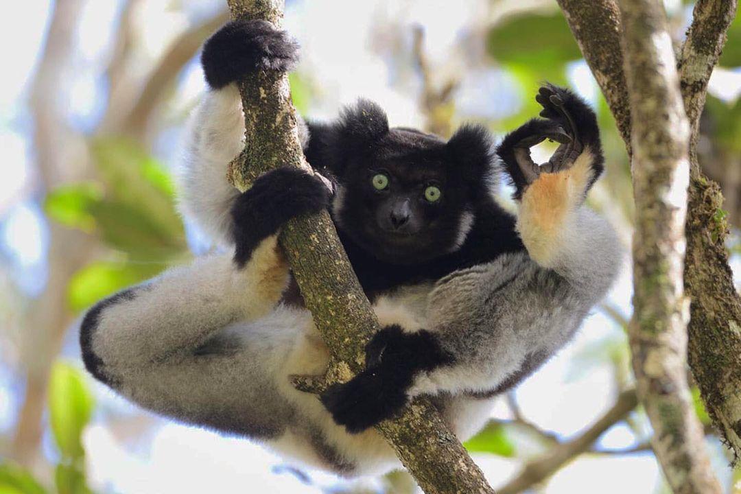 Смешные фотографии животных (14).jpg