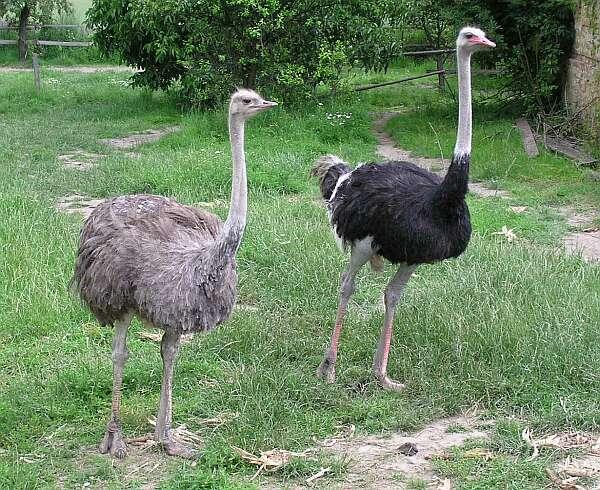 Самая-большая-птица-в-мире2