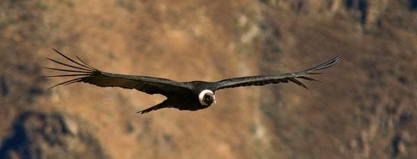Самая-большая-птица-в-мире5