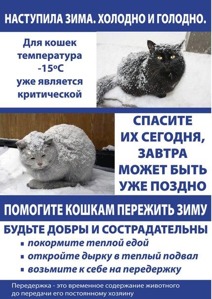 помогите кошкам