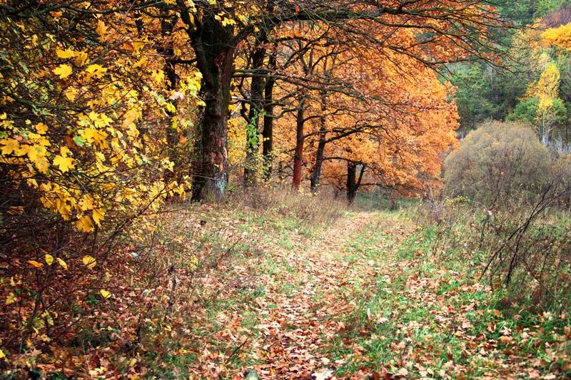 осенни лес