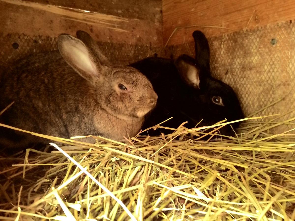 кролики в сарае