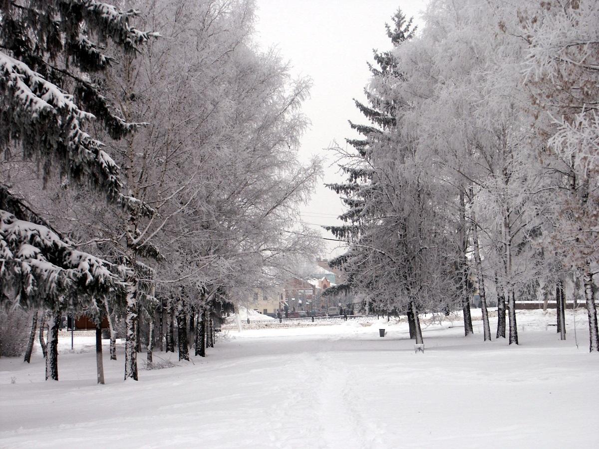 нежная зима.jpg