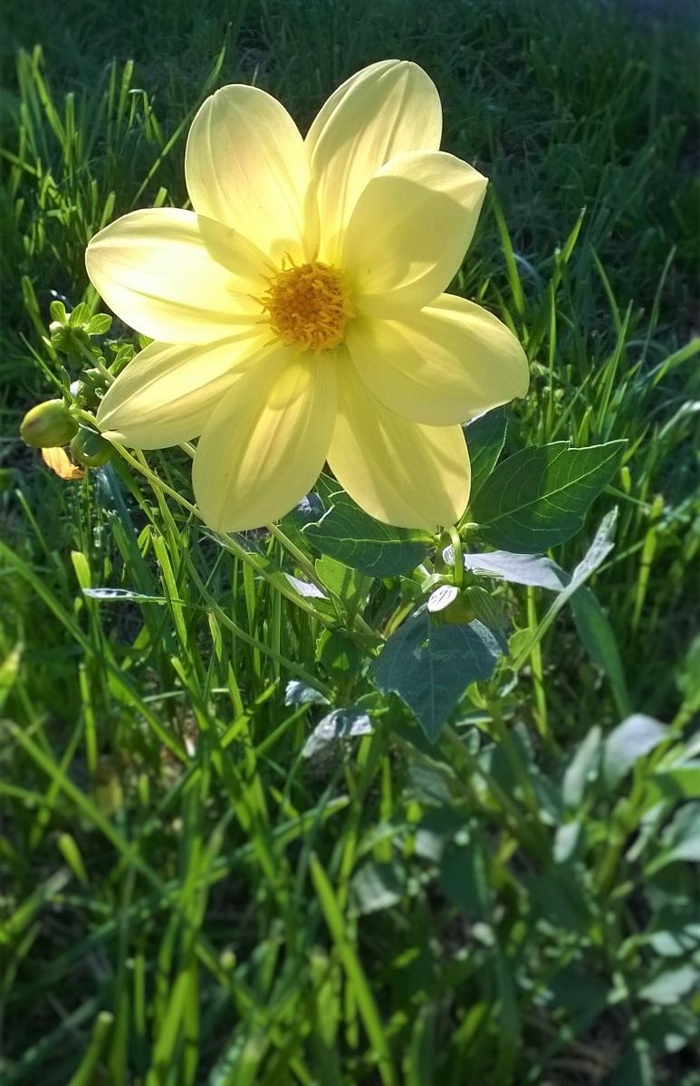 желтый цветок.jpg